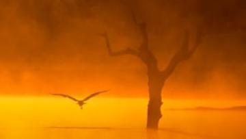 Las Aves del Frío TRAILER